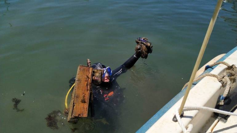 Cleaning of seabeds in the Marina of Estepona
