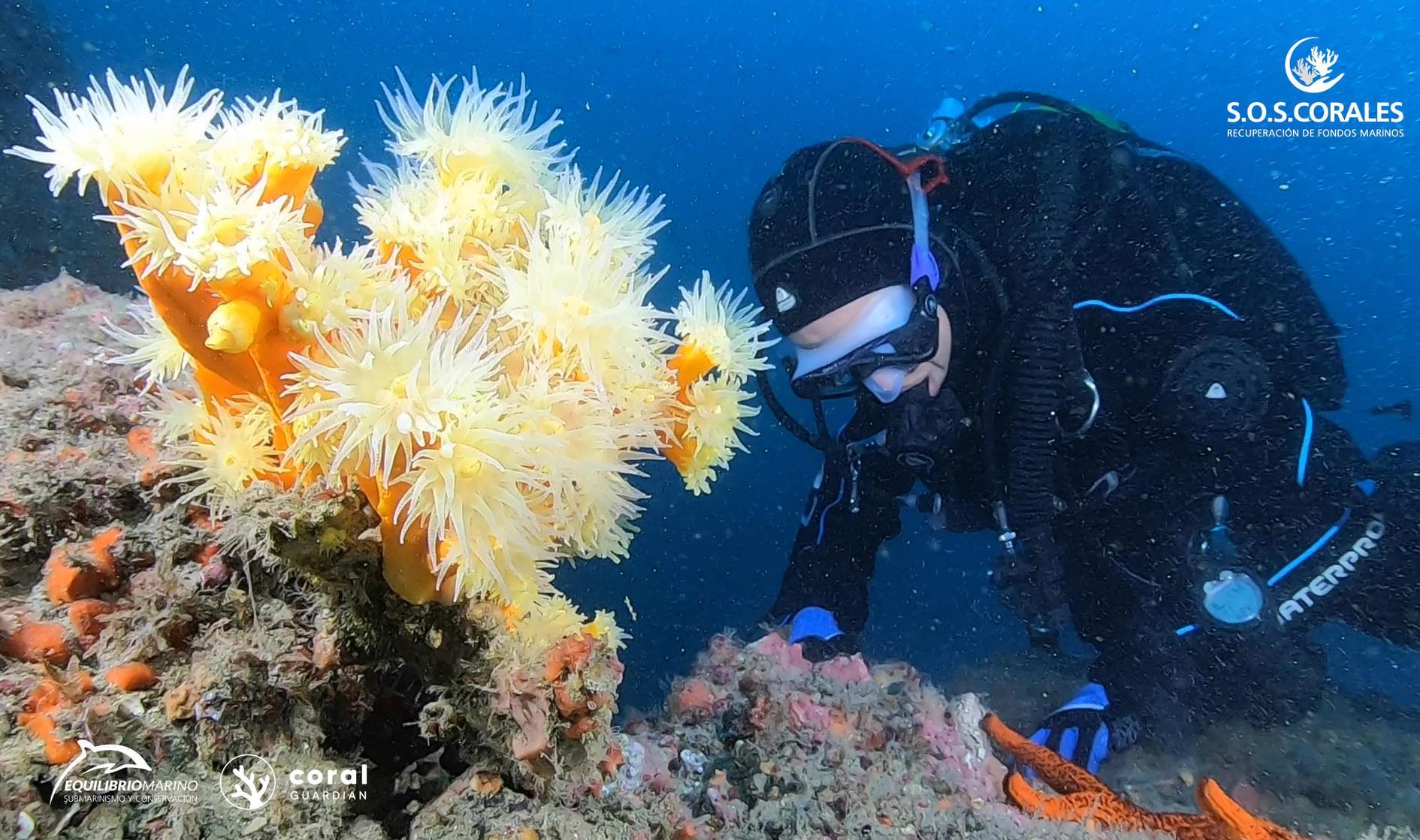 sos corals-marine balance