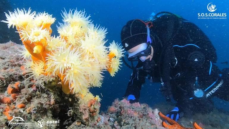 Marine Balance commence le repeuplement des coraux dans les eaux de marina del Este